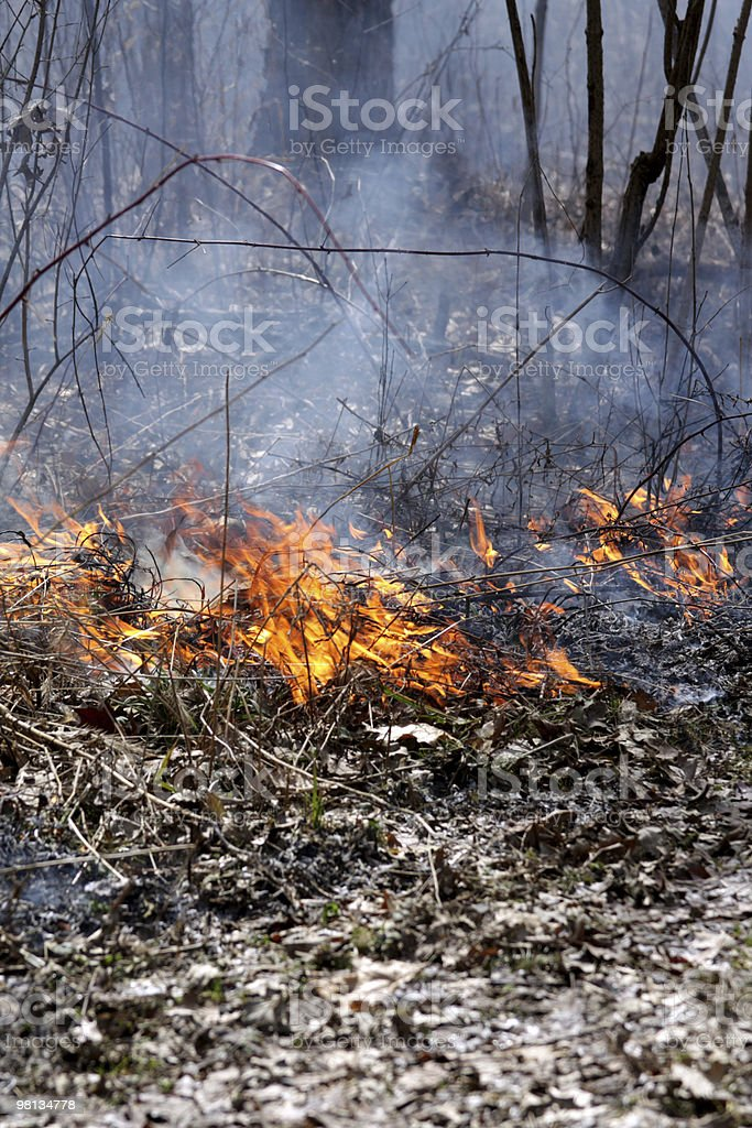 Forest Fire royalty-free stock photo