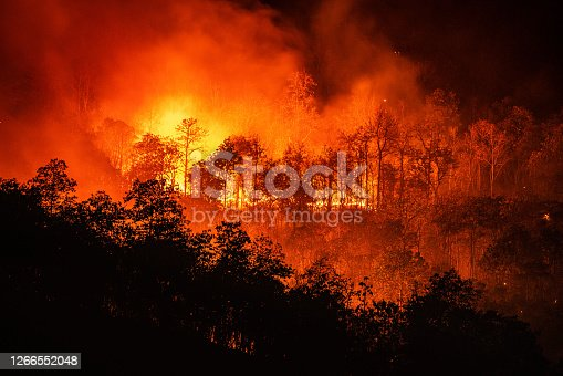 Forest fire wildfire at night time on the mountain with big smoke in Chiang Mai, Thailand