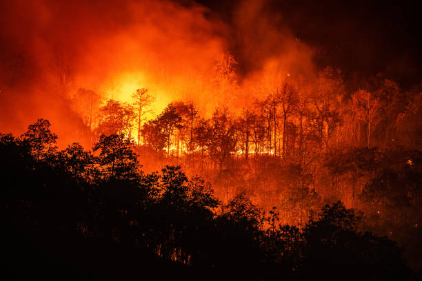 Forest fire wildfire at night time on the mountain with big smoke Forest fire wildfire at night time on the mountain with big smoke in Chiang Mai, Thailand climate change stock pictures, royalty-free photos & images