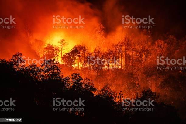 大きな煙で山の夜の時間に森林火災の山火事 - オレンジ色のストックフォトや画像を多数ご用意