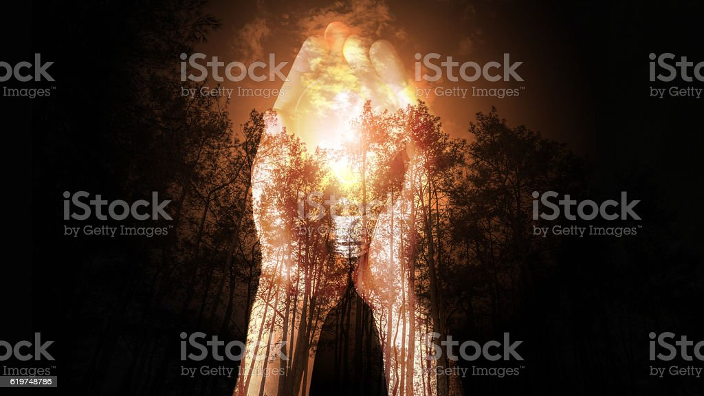 Forest Fire, Wildfire burning tree stock photo