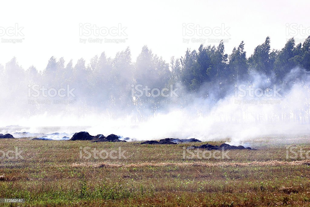 Forest fires royalty-free stock photo