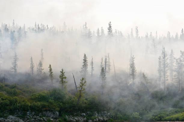 forest fires. - сибирь стоковые фото и изображения