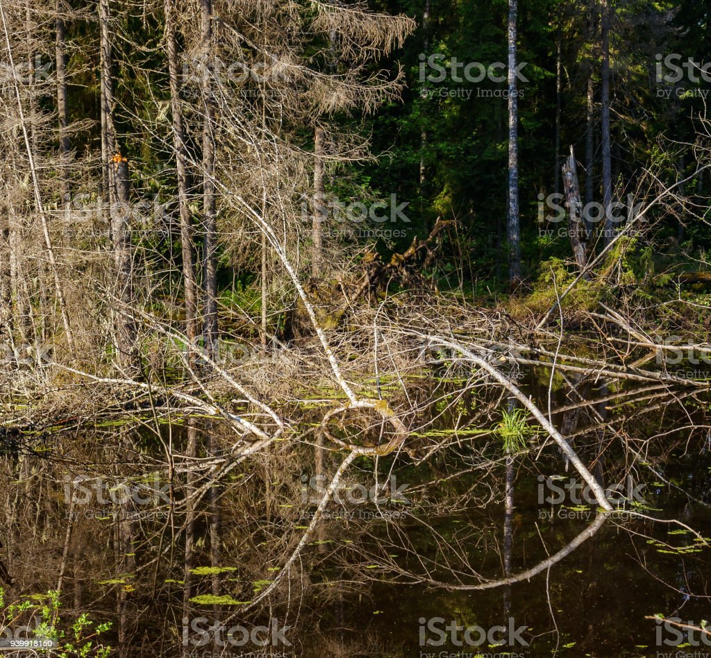 Forest fish from branches stock photo