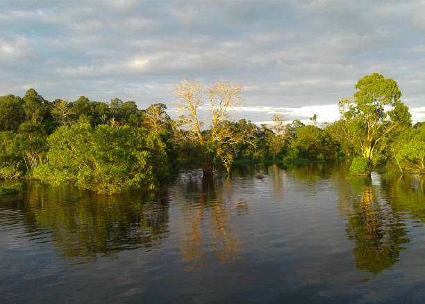 Forest flooded by the river Amazonia view and life - Jungle landscape and life of the riverine people - (Rio Negro - Amazonas) rio negro brazil stock pictures, royalty-free photos & images