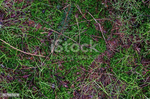 Beautiful stock image of a forest floor in autumn. Many details. Photo made outdoor with professional equipment.
