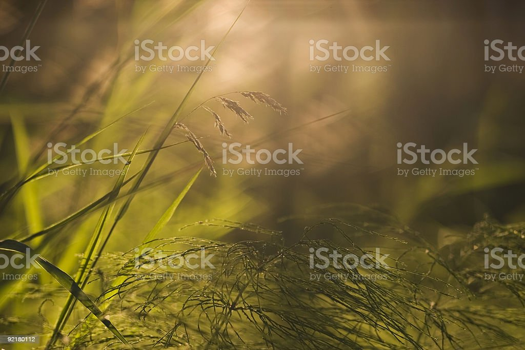 Forest floor close-up royalty-free stock photo