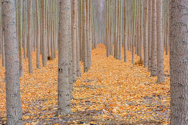 Forêt recouverts de leves avec couleurs d'automne - Photo