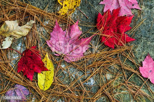 Colorful maple leaves and pine needles form an abstract design on a granite boulder in Waitsfield, Vermont