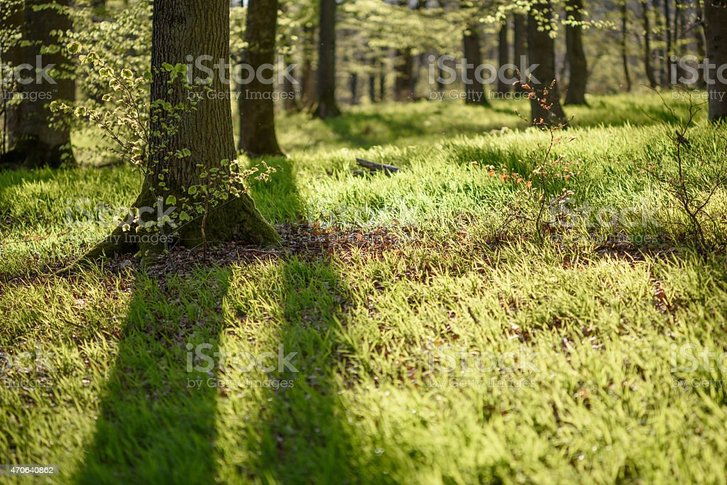 forest floor in spring stock photo