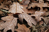Autumn fallen leaf with water drops after the rain