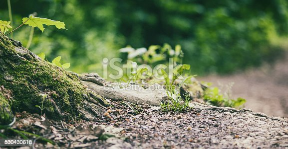 Forest floor  detail with mossy tree roots