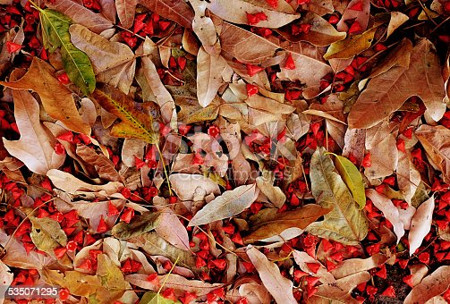 The floor of a forest, covered with dry leaves, fallen flowers, and other organic fragments, for use as background or texture.