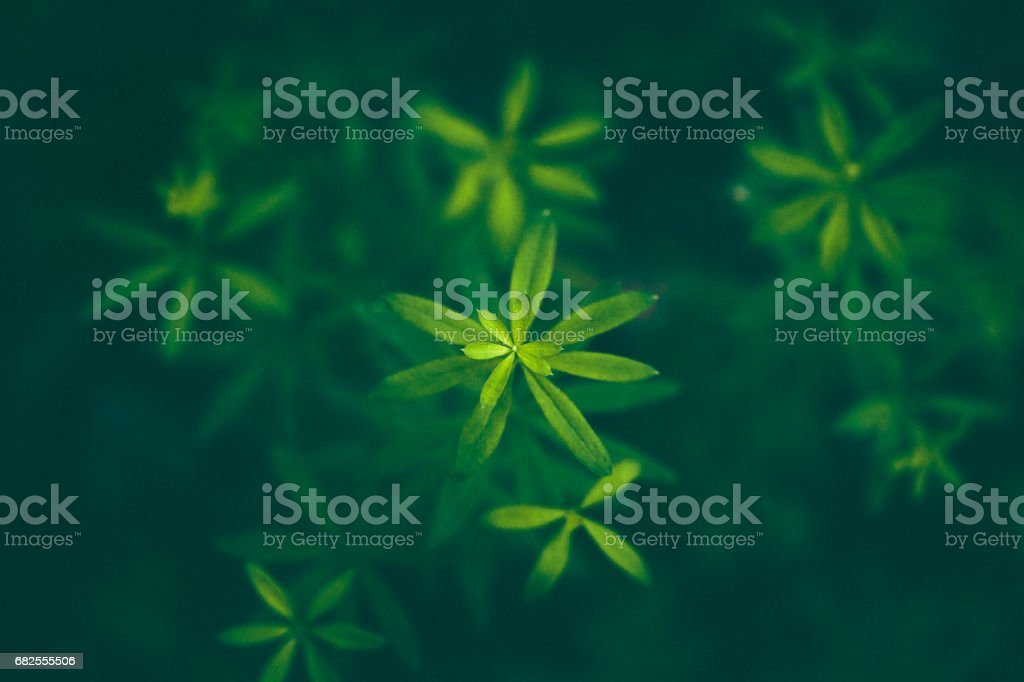 Forest flower Background stock photo