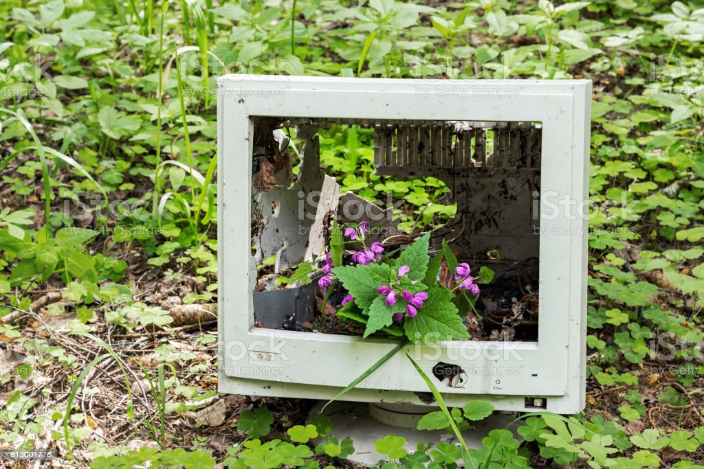 A forest flower grows from a discarded old monitor in the forest stock photo