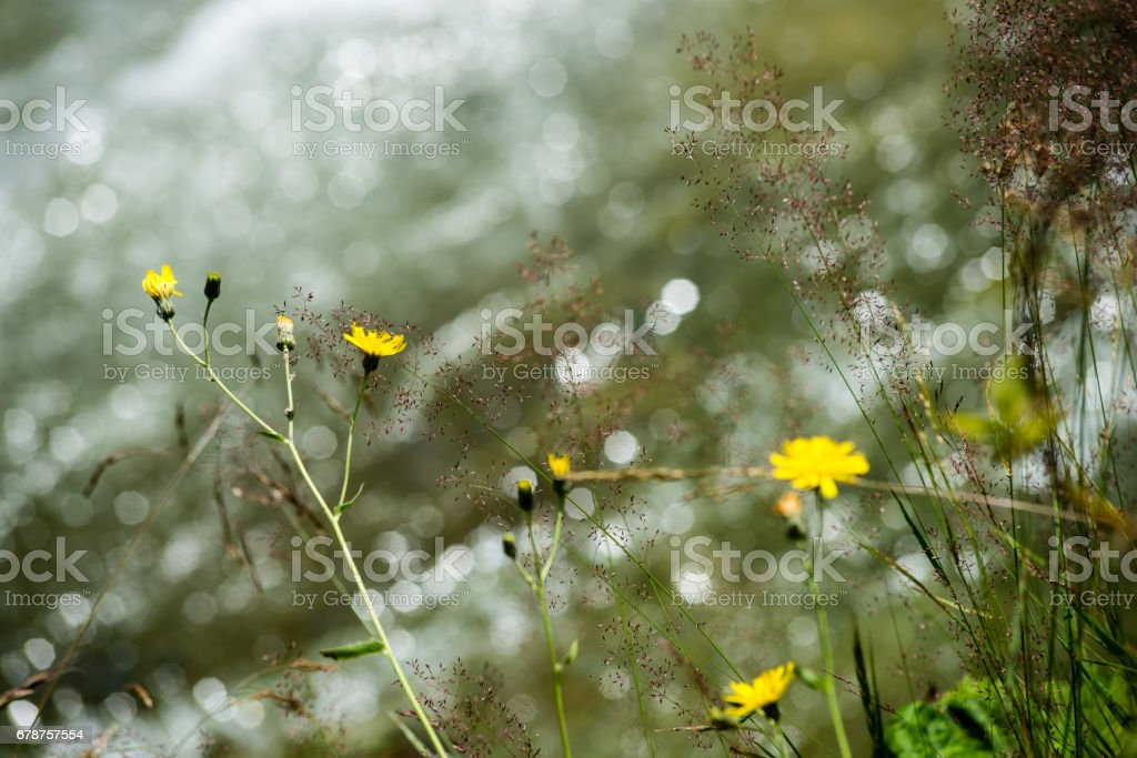 forest flowers and blossoms in spring photo libre de droits