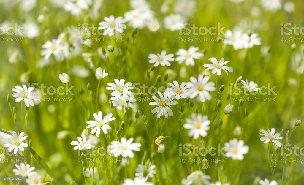 Bosque flores. foto de stock libre de derechos