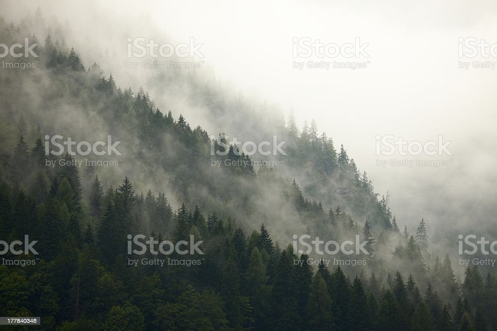 Forest Fog royalty-free stock photo