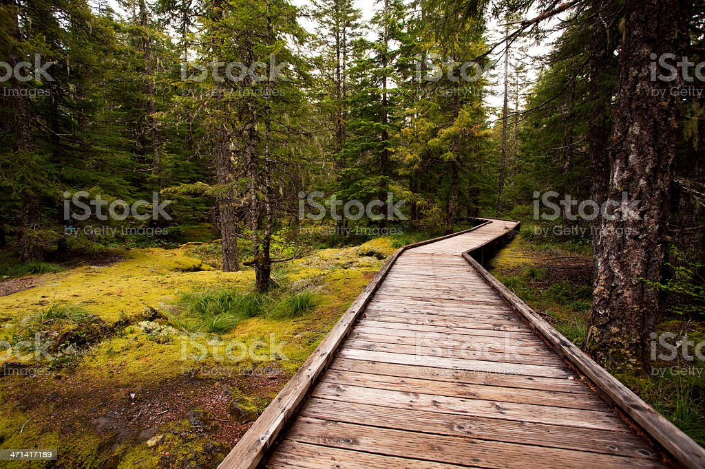 Forest Foot Path stock photo