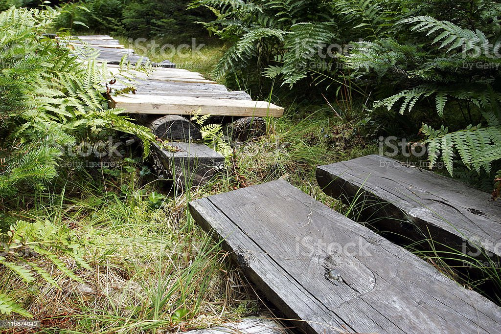 Forest footpath royalty-free stock photo