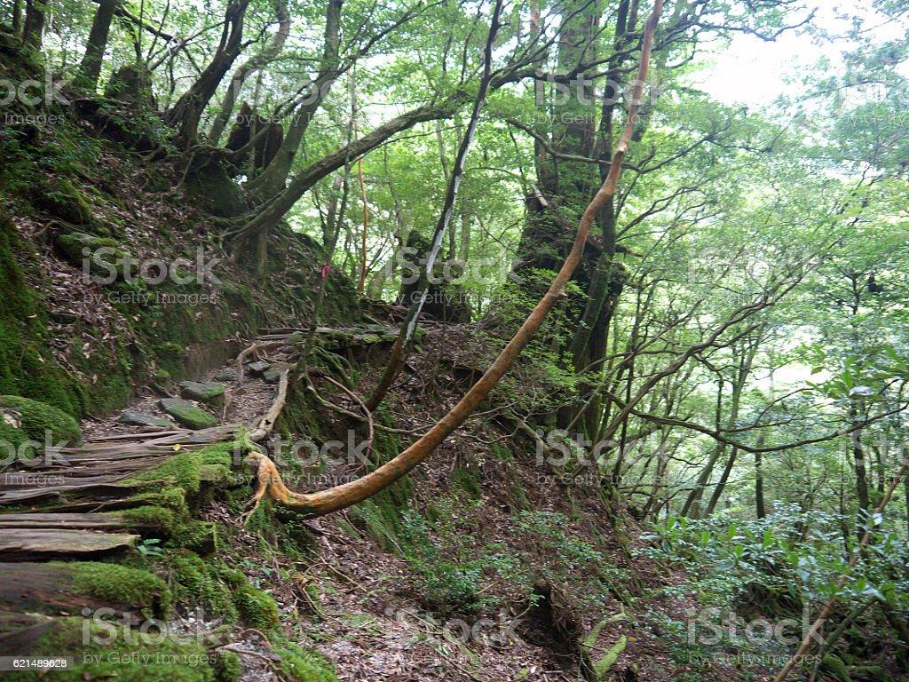 Forest Weg Lizenzfreies stock-foto