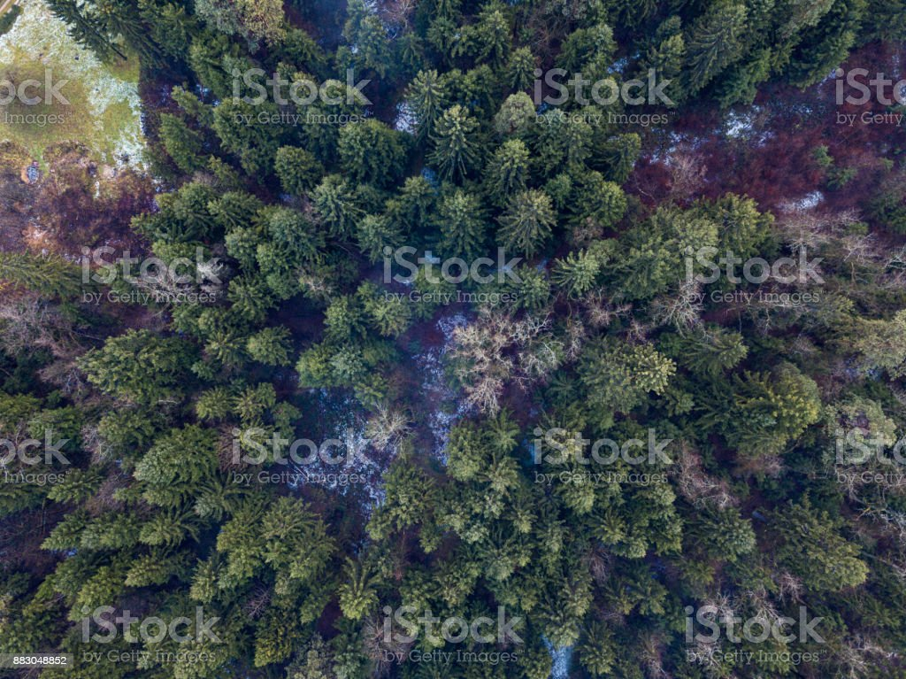 Forest from above in the cold morning. stock photo
