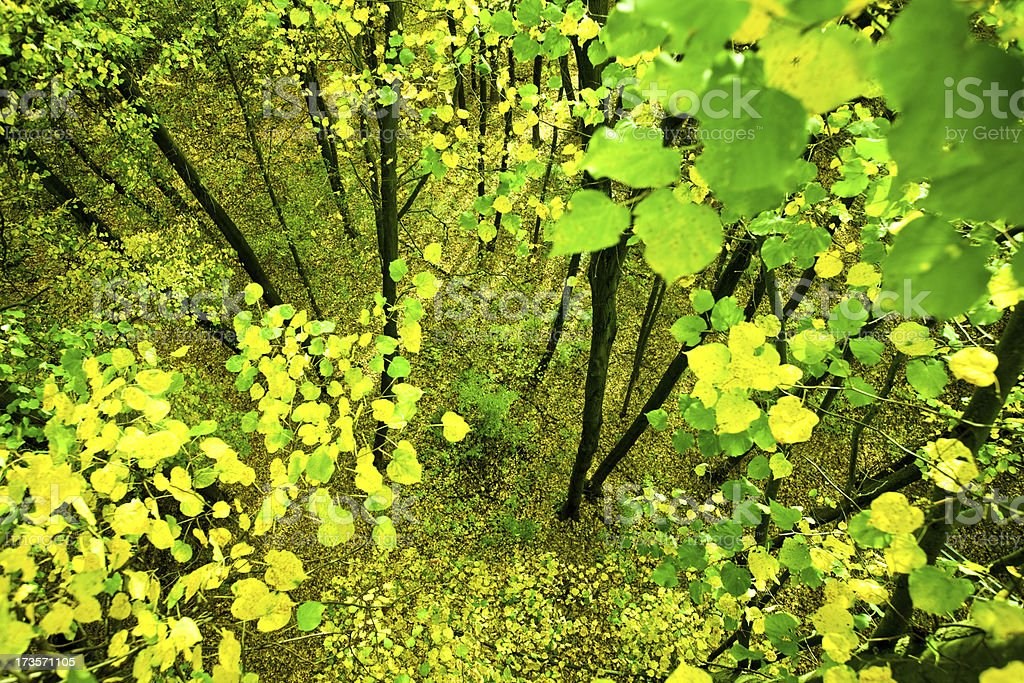Forest from above stock photo