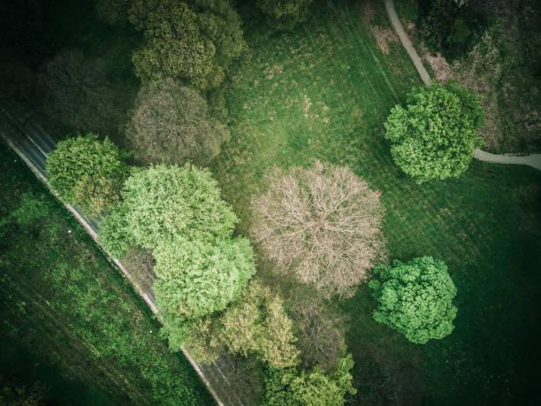skog från ovan - drone copenhagen bildbanksfoton och bilder