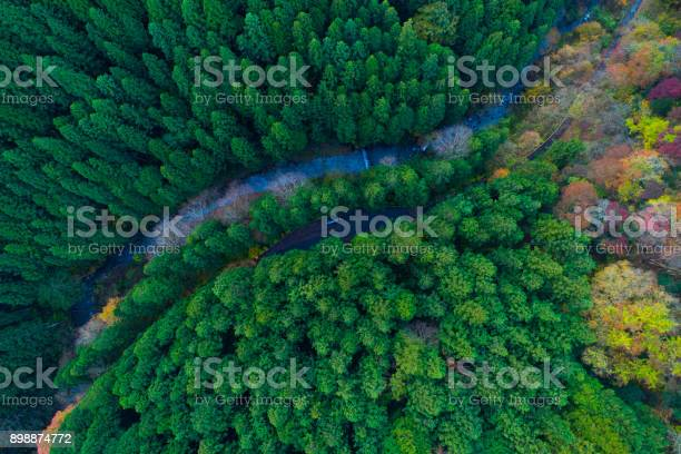 Photo of forest from bird's eye view.