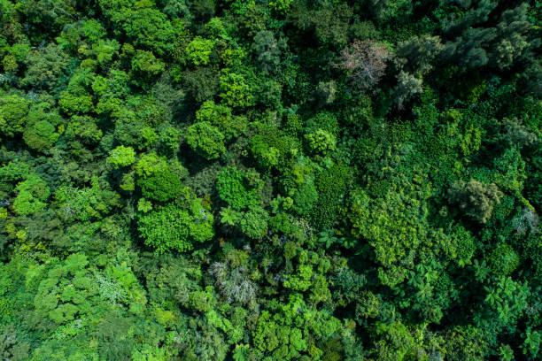 조류의 눈 보기에서 숲입니다. - mountain top 뉴스 사진 이미지
