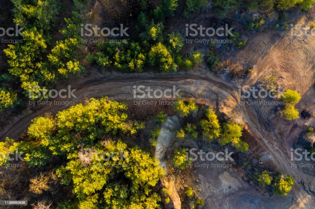 forest, drone view, brown, nature