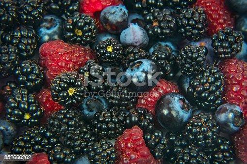 502634476istockphoto Forest fruits background 852666262