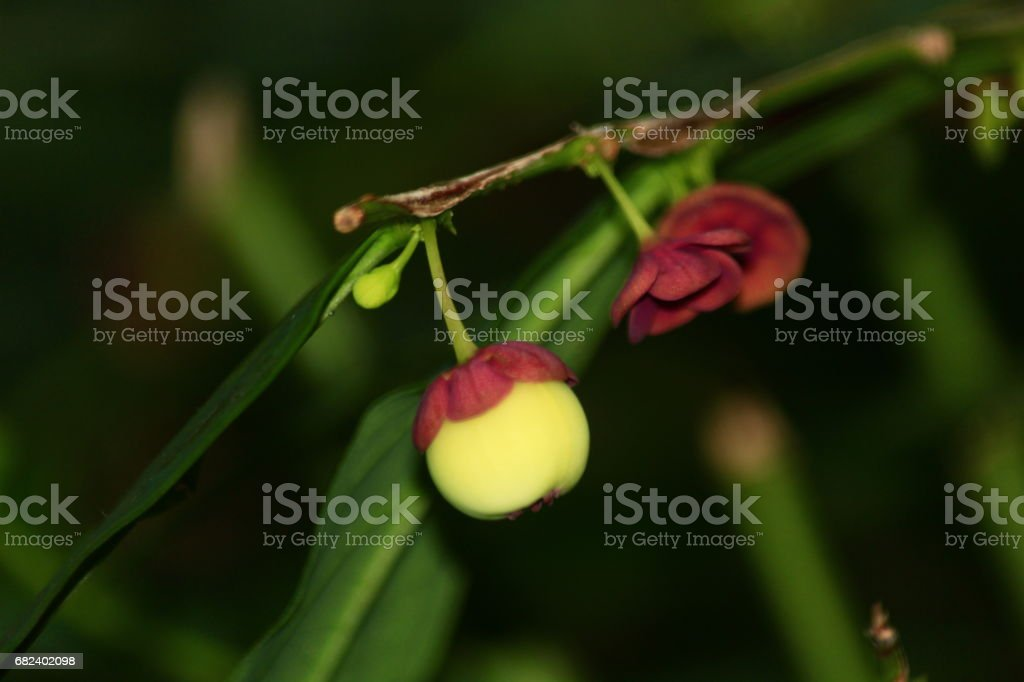 Forest fruits royalty-free stock photo