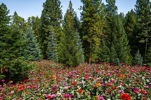 Forest Garden stock photo