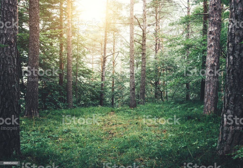 Forest Glade stock photo