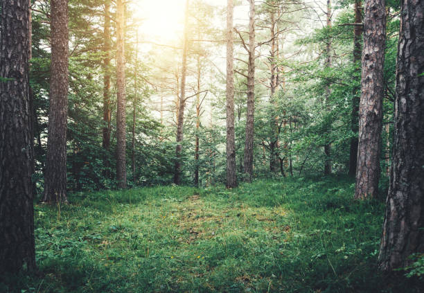 Forest Glade Idyllic forest glade. glade stock pictures, royalty-free photos & images