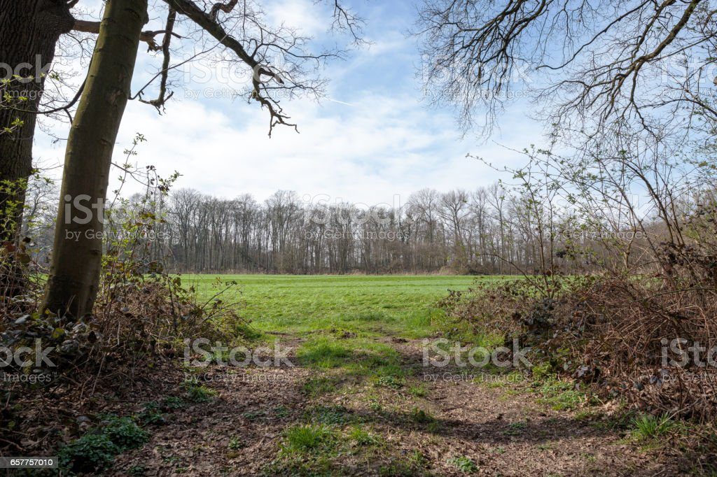 Forest Glade with awesome blue Sky/ Germany stock photo