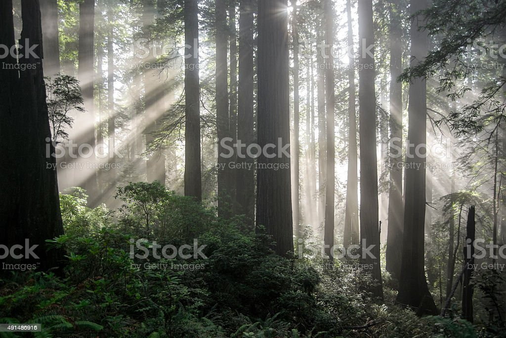 Forest Glory stock photo