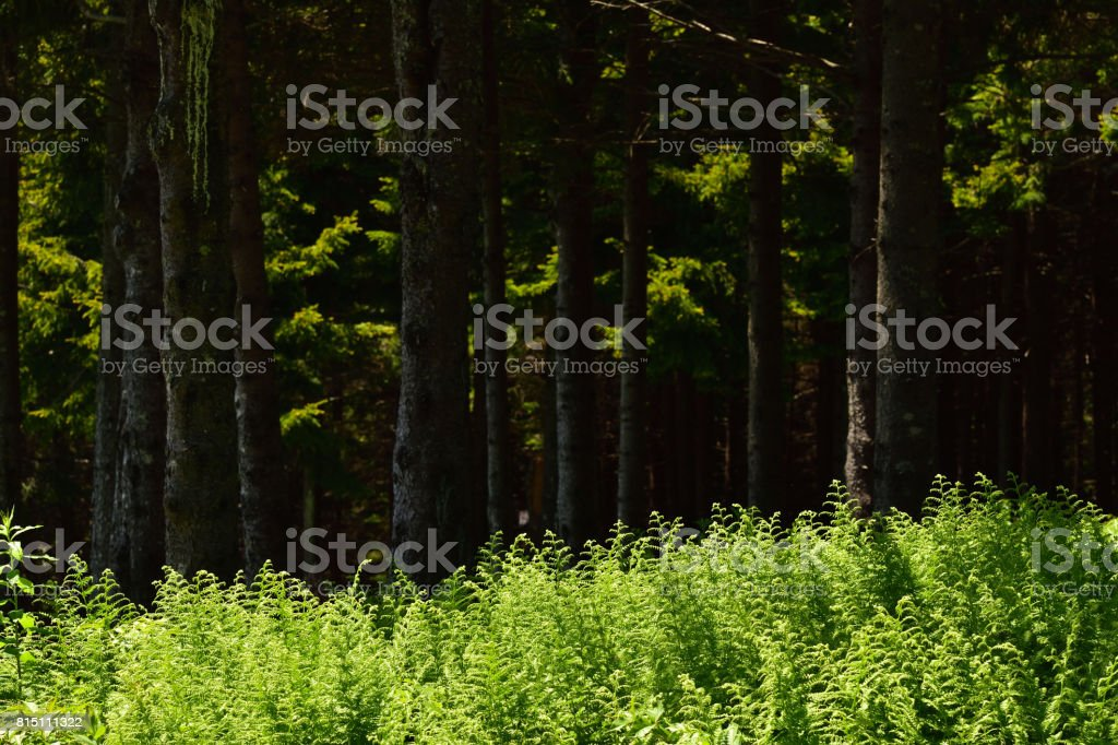 Forest Greens (variation of greens in the forest) stock photo