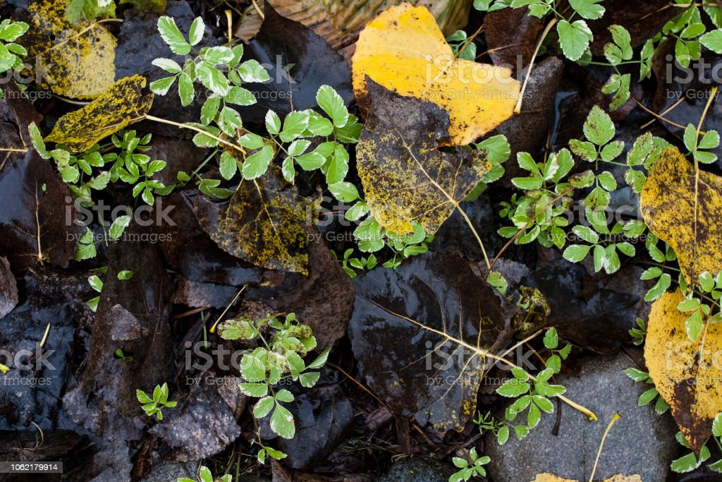 Forest ground in autumn with yellow leaves stock photo