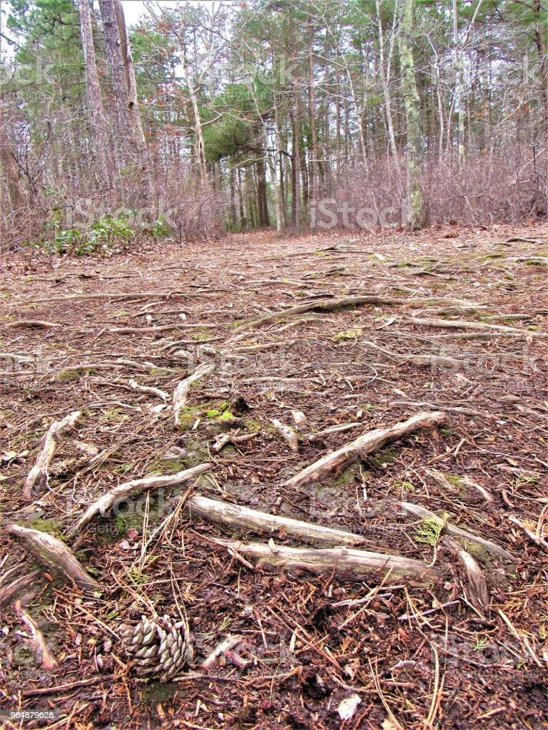 森林地面 - 免版稅地底下圖庫照片
