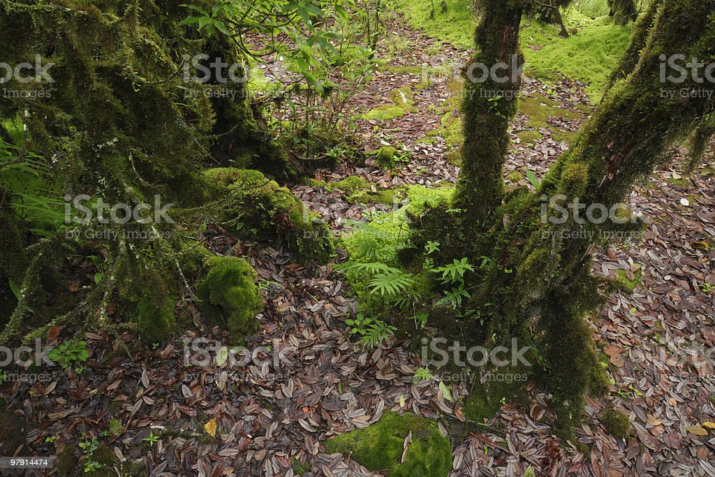 Forest ground royalty-free stock photo