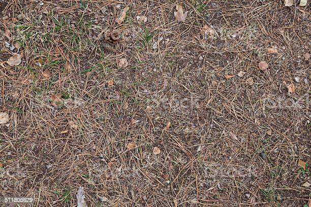Photo of Forest Ground texture