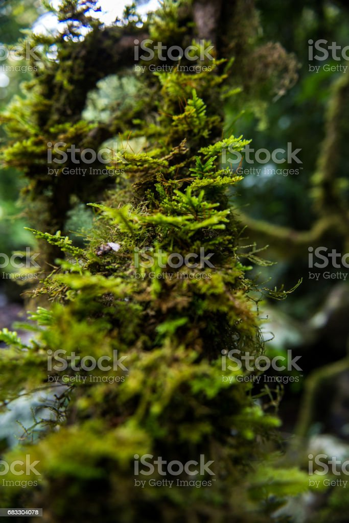 Forest Growth foto stock royalty-free