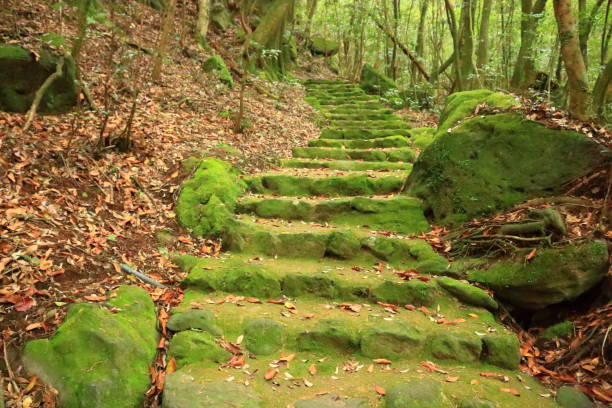 Forest, Hallasan, Valley, Stone, Moss Gate, Moss Staircase, Moss, Temple, Hyonom, stock photo