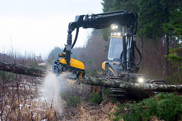 임산 수확기 - 목재 공업 뉴스 사진 이미지