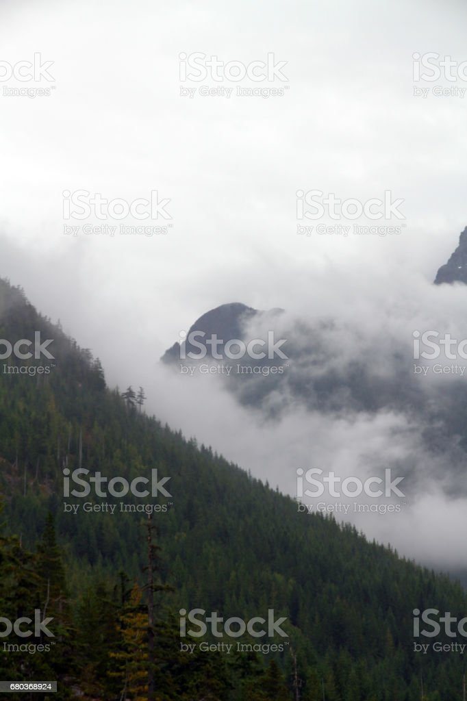 Forest Heights royalty-free stock photo