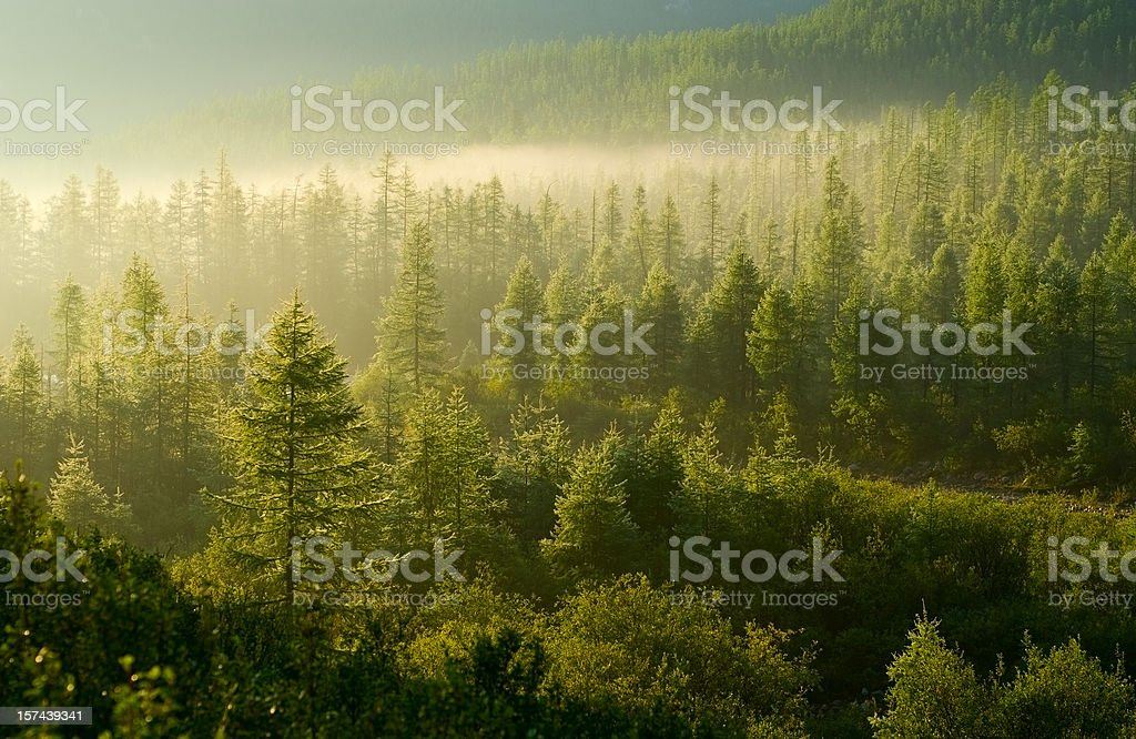 Forest illuminated by the rising sun stock photo
