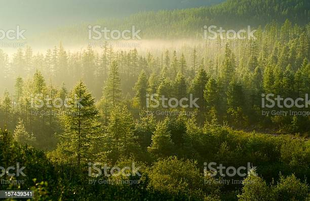 Photo of Forest illuminated by the rising sun