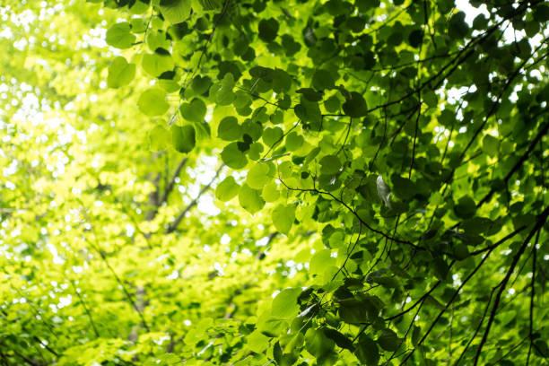 Wald Bilder – Foto